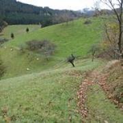 Peterstaler schwarzwaldsteig2